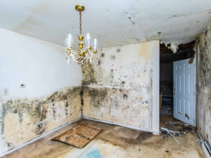 Mold Damage